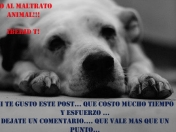 Animales y sus frases [img]