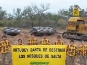 Estamos defendiendo los Bosques de Salta. Fotos y videos.