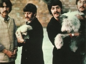 Beatles love animals